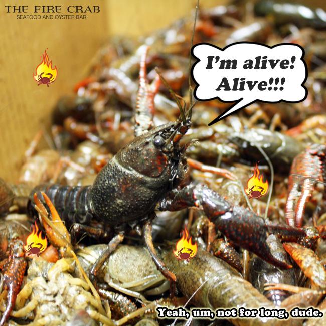 Live Crawfish Fresh Orange County OC Garden Grove Fire Crab