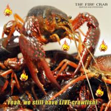 Live Crawfish in Stock Orange County OC Fire Crab Garden Grove