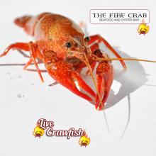 Live Crawfish Eat Me Louisiana Cajun Boil Orange County OC Garden Grove Fire Crab